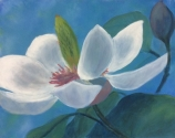 Scented Magnolia